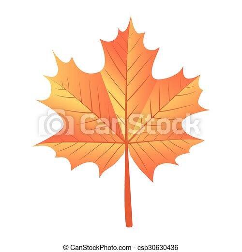 maple leaf - csp30630436