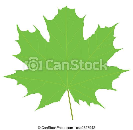 maple leaf - csp9827942