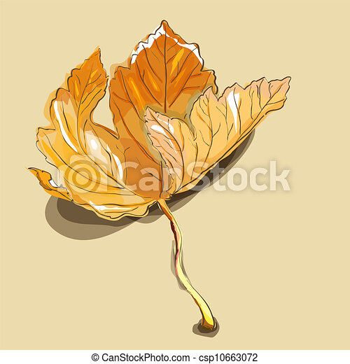 Maple leaf - csp10663072