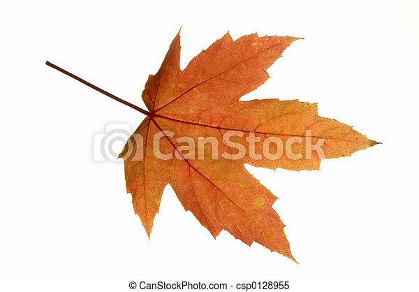 Maple Leaf Isolated - csp0128955