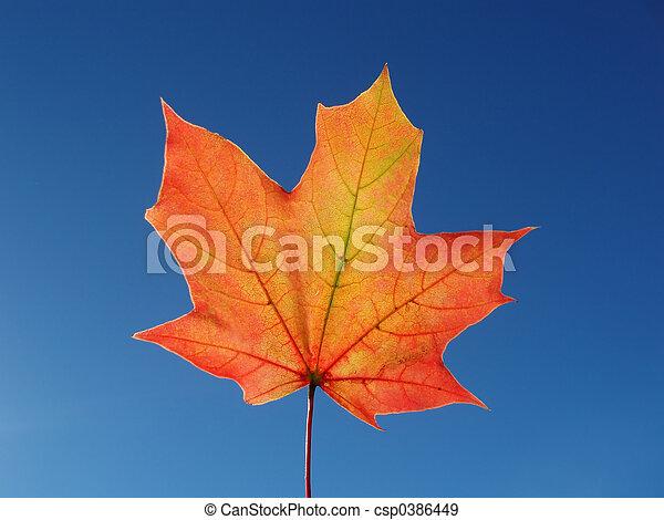 maple leaf - csp0386449