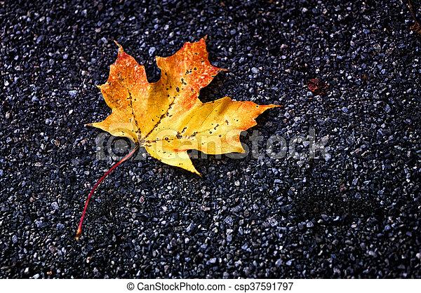 Maple Leaf - csp37591797