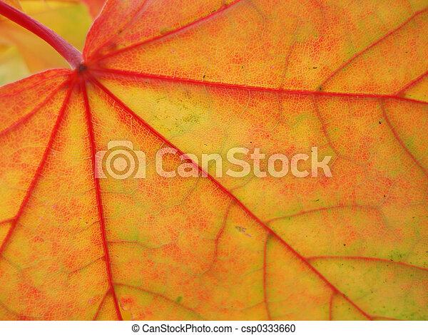 maple leaf - csp0333660