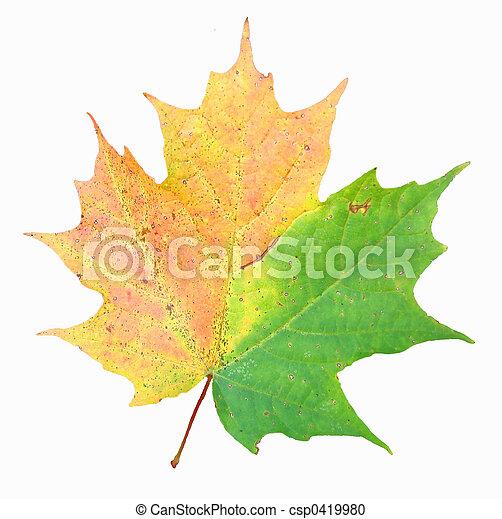 Maple leaf - csp0419980