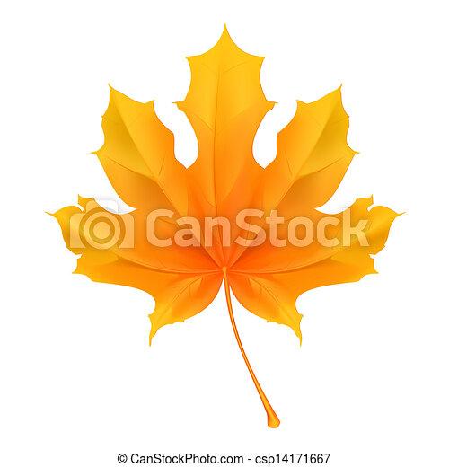 Maple leaf, vector - csp14171667