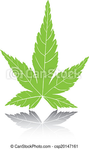 Maple Leaf Vector Illustration. - csp20147161