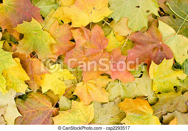 Maple leaves background - csp2293517