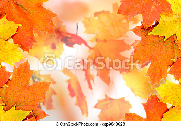 Maple leaves background - csp9843628