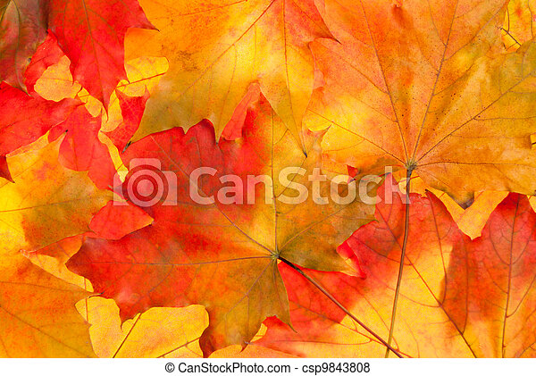 Maple leaves background - csp9843808