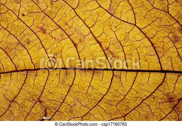 Maple leaves background - csp17160763