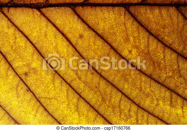 Maple leaves background - csp17160766