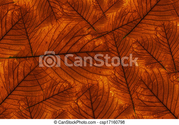 Maple leaves background - csp17160798