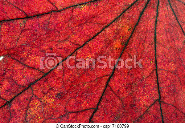 Maple leaves background - csp17160799