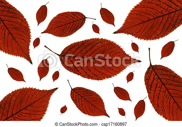 Maple leaves background - csp17160897