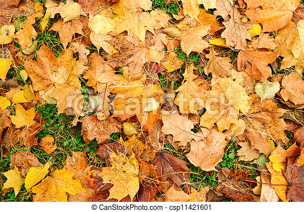 Maple leaves background - csp11421601