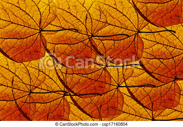 Maple leaves background - csp17160804