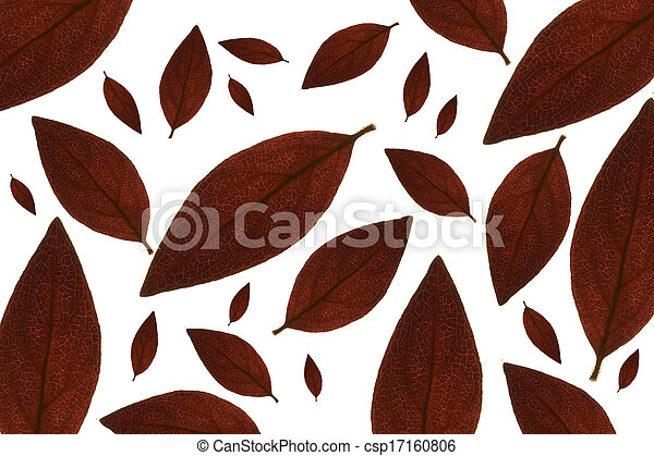 Maple leaves background - csp17160806