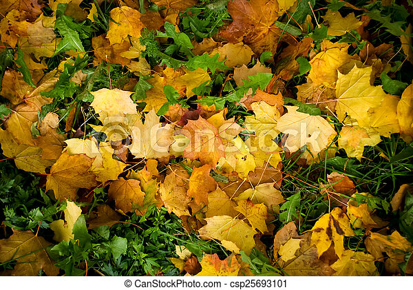 Maple leaves background - csp25693101
