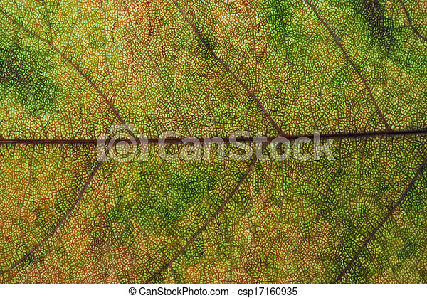 Maple leaves background - csp17160935