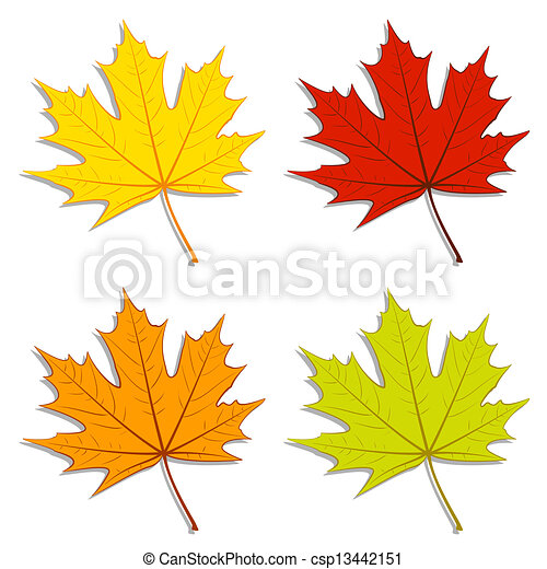 Maple Leaves - csp13442151