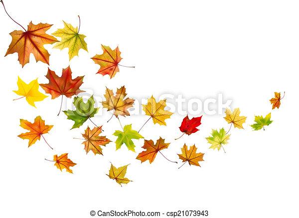 Maple leaves falling - csp21073943