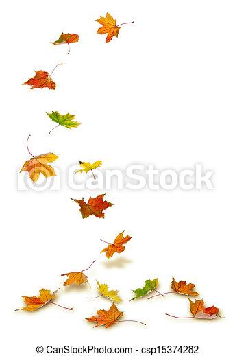 Maple leaves falling - csp15374282
