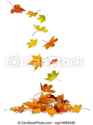 Maple leaves falling - csp14965448