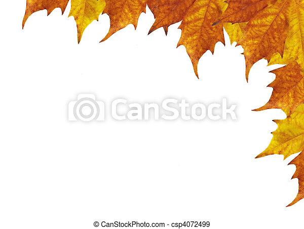 Maple leaves frame - csp4072499