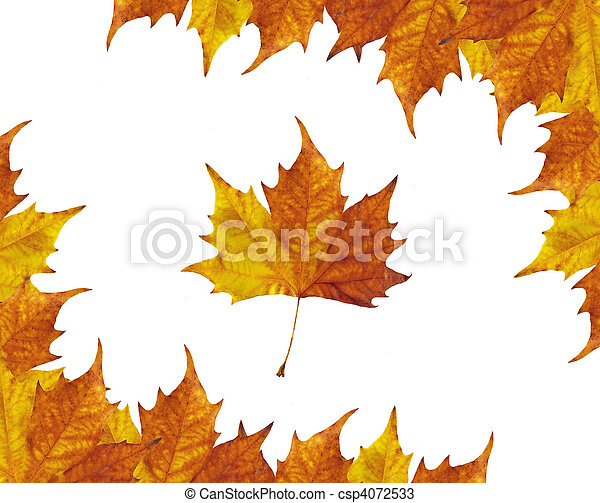 Maple leaves frame - csp4072533