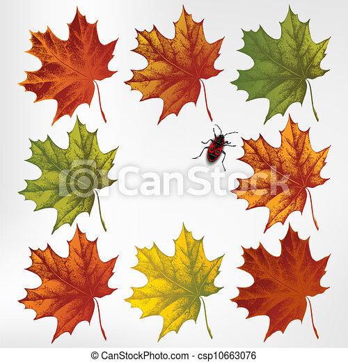 Maple leaves in autumn, set. Vector - csp10663076