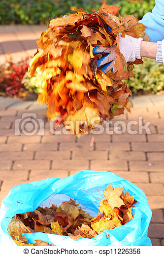 maple leaves in hand , golden autumn - csp11226356