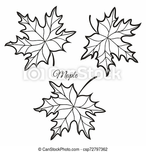 Maple leaves in stained illustration. - csp72797362