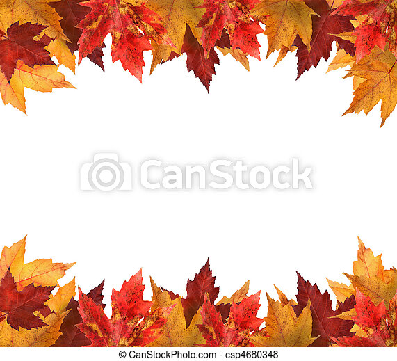 Maple leaves isolated on white - csp4680348