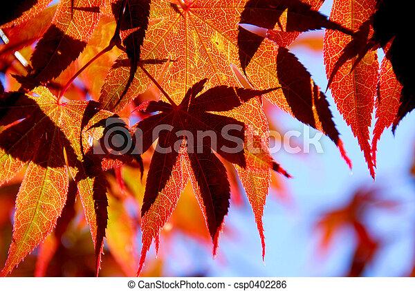 Maple leaves - csp0402286