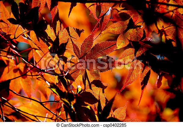 Maple leaves - csp0402285