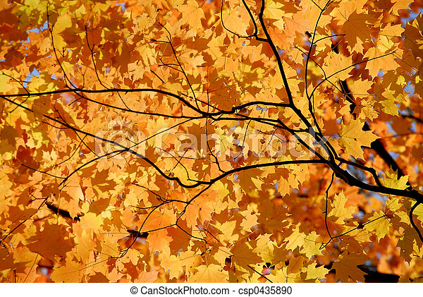 Maple leaves - csp0435890