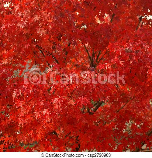 Maple leaves - csp2730903