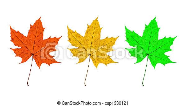 Maple Leaves Trio - csp1330121