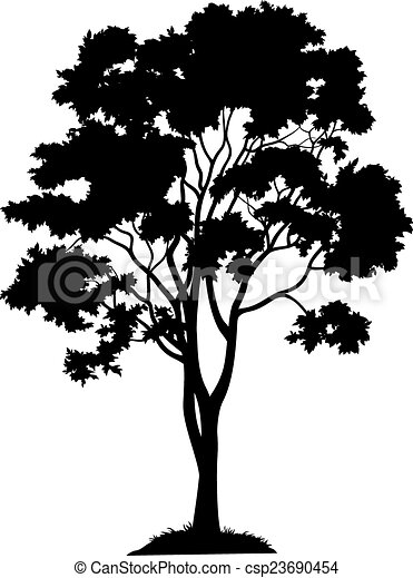 Maple tree and grass, silhouette. Maple tree with leaves ...