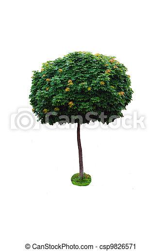 maple tree - csp9826571