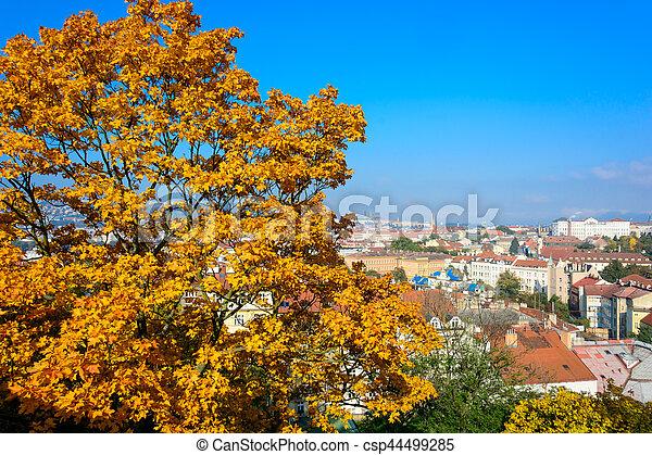 Maple tree - csp44499285