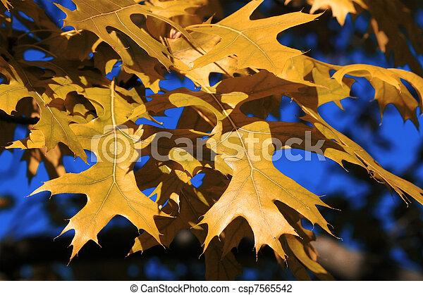 Maple tree - csp7565542