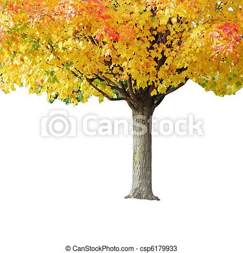 Maple tree - csp6179933