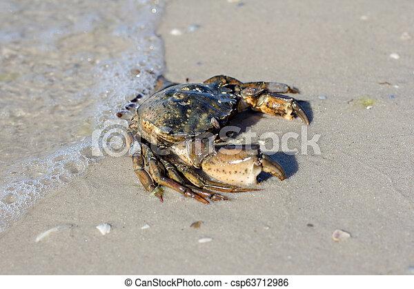 Cangrejo marino en la orilla. - csp63712986