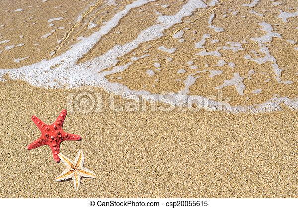 Estrellas marinas - csp20055615