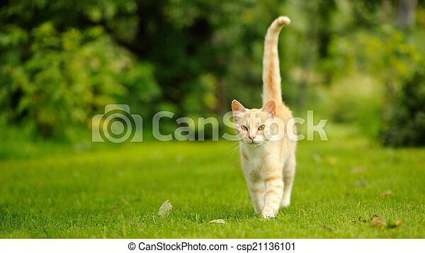 marche, (16:9, ratio), chat, vert, aspect, gracieux, herbe - csp21136101