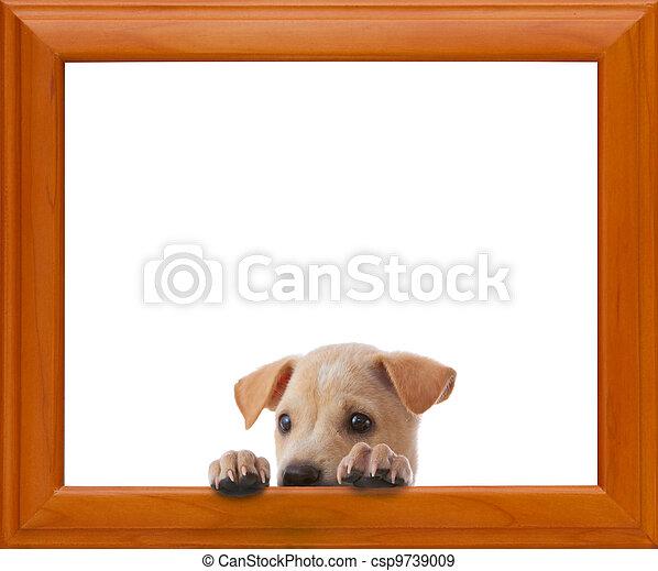 Marco, perro. Marco vacío, perro blanco, plano de fondo.
