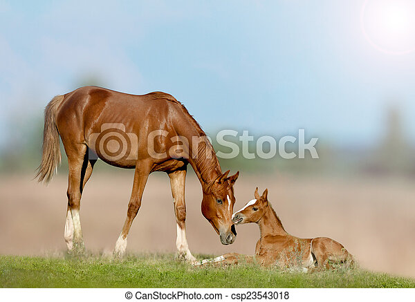 mare and foal - csp23543018