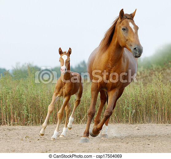 mare and foal - csp17504069