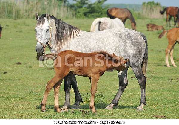 mare and foal - csp17029958